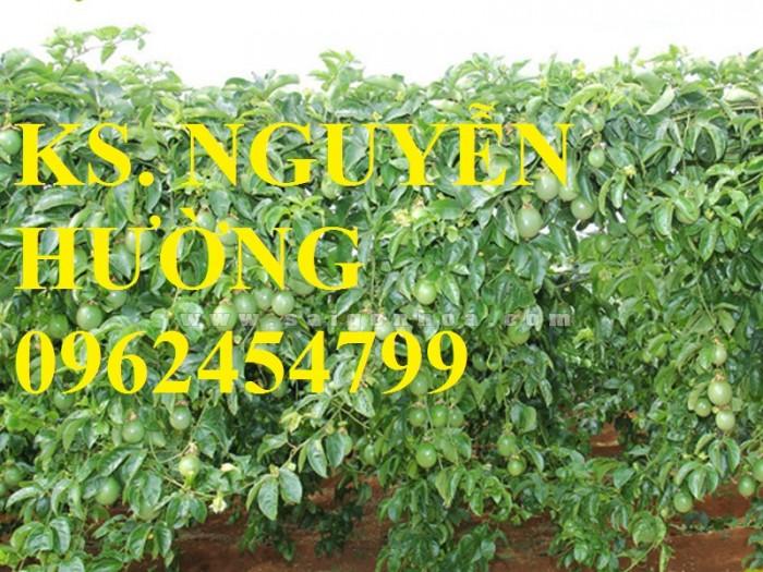 Cung cấp giống cây chanh leo, chanh dây tím đài loan cây ghép, chuẩn nhập khẩu, giao cây toàn quốc11