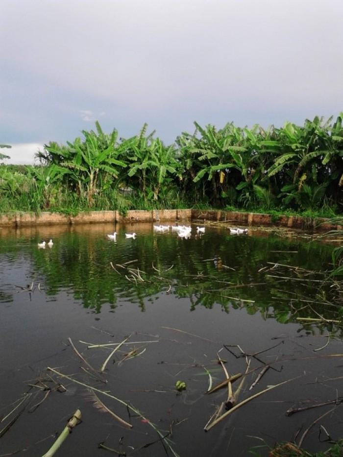 Bán trang trại Đạt lý cách Buôn Ma Thuột 10km