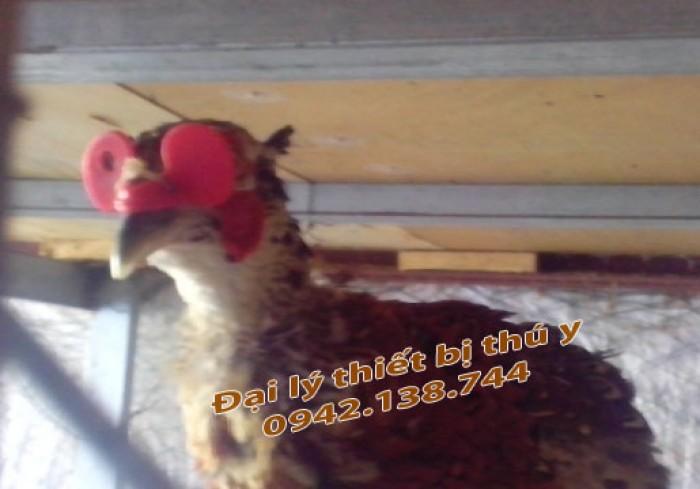 Mắt kính đeo cho gà - chim khắc phục hiện tượng cắt mổ lông, kinh ga khong chot, mat kinh ga co chot4