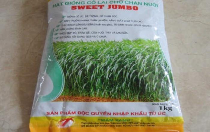 Hạt giống cỏ sweet jumbo, hạt giống sweet jumbo, giống cỏ sweet jumbo, số lượng lớn4