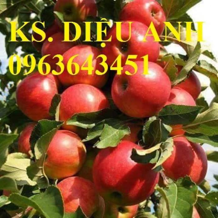 Cây giống nhập mới lạ: táo tây ruột đỏ, na bở Đài Loan, mãng cầu Đài Loan, mít trái dài Đài Loan S1