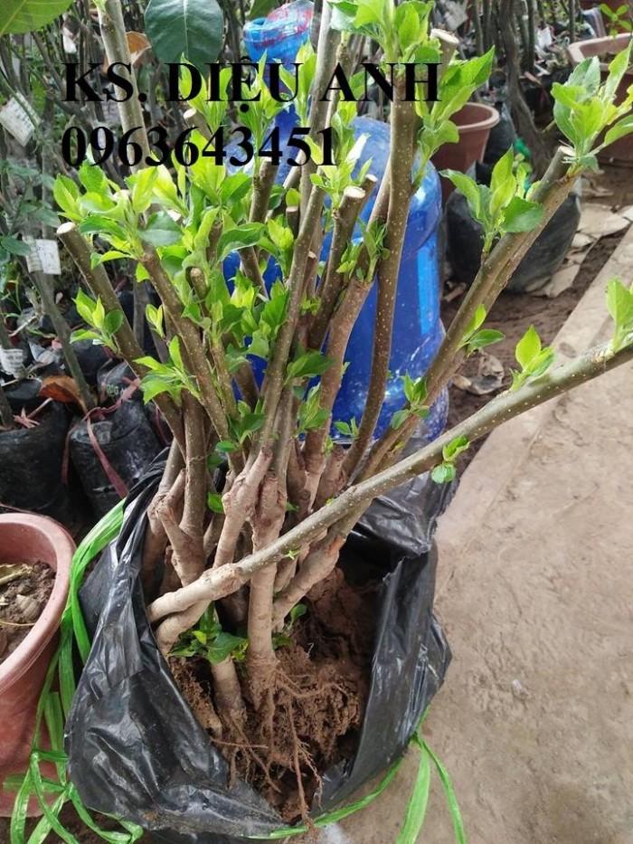 Cây giống nhập mới lạ: táo tây ruột đỏ, na bở Đài Loan, mãng cầu Đài Loan, mít trái dài Đài Loan S11