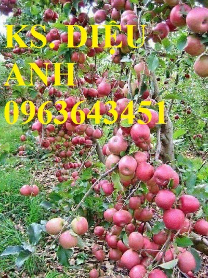 Cây giống nhập mới lạ: táo tây ruột đỏ, na bở Đài Loan, mãng cầu Đài Loan, mít trái dài Đài Loan S12