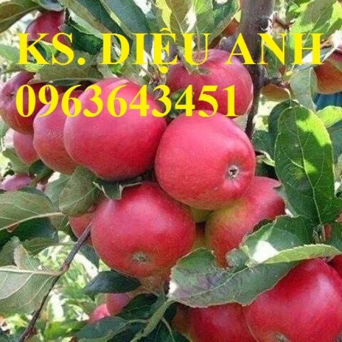 Cây giống nhập mới lạ: táo tây ruột đỏ, na bở Đài Loan, mãng cầu Đài Loan, mít trái dài Đài Loan S13