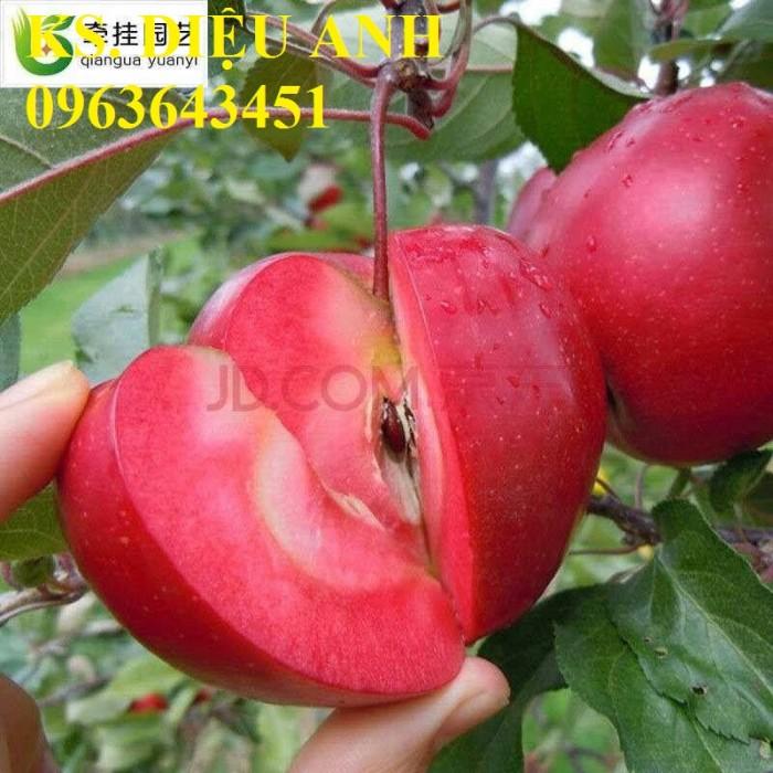 Cây giống nhập mới lạ: táo tây ruột đỏ, na bở Đài Loan, mãng cầu Đài Loan, mít trái dài Đài Loan S14
