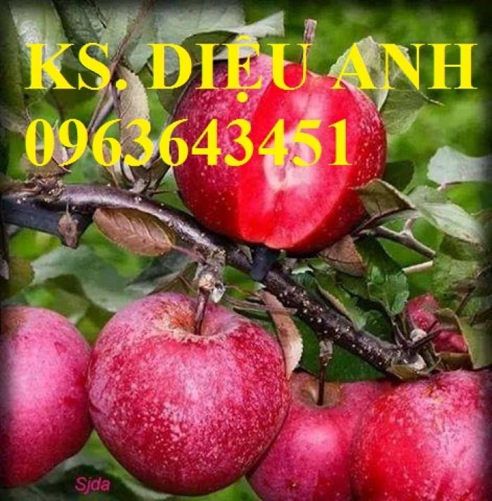 Cây giống nhập mới lạ: táo tây ruột đỏ, na bở Đài Loan, mãng cầu Đài Loan, mít trái dài Đài Loan S15