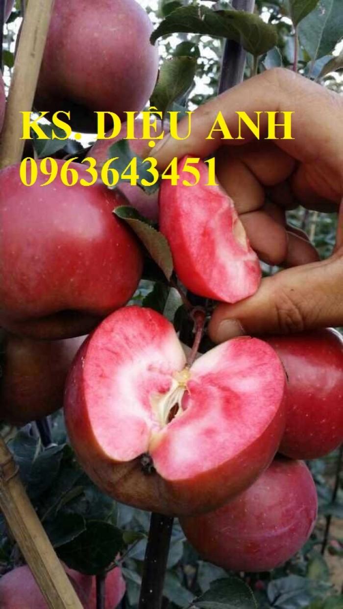 Cây giống nhập mới lạ: táo tây ruột đỏ, na bở Đài Loan, mãng cầu Đài Loan, mít trái dài Đài Loan S17