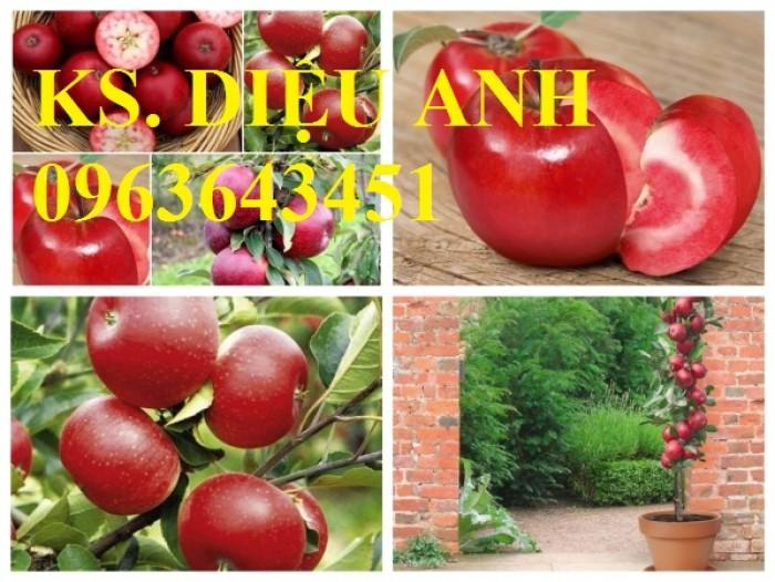 Cây giống nhập mới lạ: táo tây ruột đỏ, na bở Đài Loan, mãng cầu Đài Loan, mít trái dài Đài Loan S19