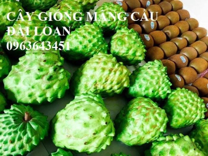 Cây giống nhập mới lạ: táo tây ruột đỏ, na bở Đài Loan, mãng cầu Đài Loan, mít trái dài Đài Loan S110