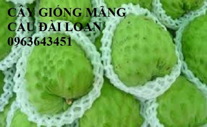Cây giống nhập mới lạ: táo tây ruột đỏ, na bở Đài Loan, mãng cầu Đài Loan, mít trái dài Đài Loan S112
