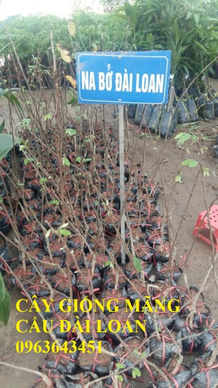 Cây giống nhập mới lạ: táo tây ruột đỏ, na bở Đài Loan, mãng cầu Đài Loan, mít trái dài Đài Loan S113