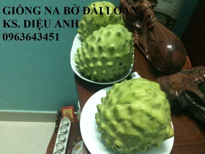 Cây giống nhập mới lạ: táo tây ruột đỏ, na bở Đài Loan, mãng cầu Đài Loan, mít trái dài Đài Loan S115
