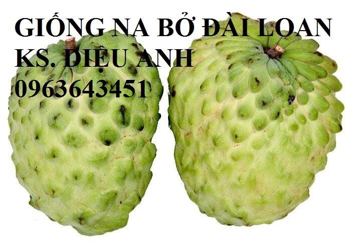 Cây giống nhập mới lạ: táo tây ruột đỏ, na bở Đài Loan, mãng cầu Đài Loan, mít trái dài Đài Loan S116