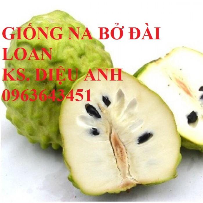 Cây giống nhập mới lạ: táo tây ruột đỏ, na bở Đài Loan, mãng cầu Đài Loan, mít trái dài Đài Loan S117