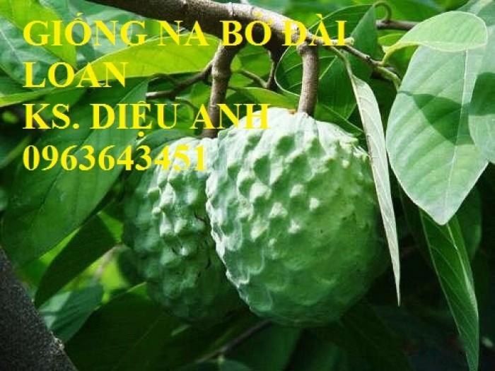 Cây giống nhập mới lạ: táo tây ruột đỏ, na bở Đài Loan, mãng cầu Đài Loan, mít trái dài Đài Loan S118
