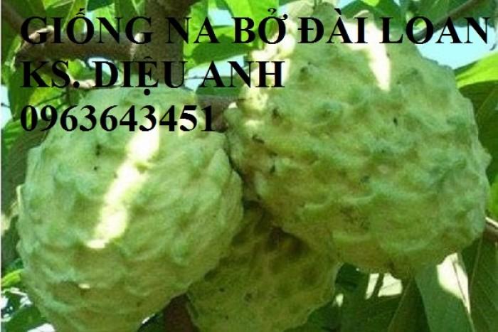 Cây giống nhập mới lạ: táo tây ruột đỏ, na bở Đài Loan, mãng cầu Đài Loan, mít trái dài Đài Loan S119