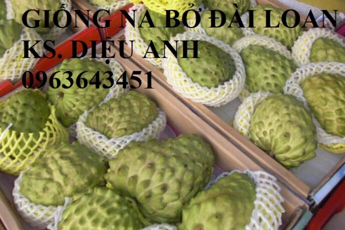 Cây giống nhập mới lạ: táo tây ruột đỏ, na bở Đài Loan, mãng cầu Đài Loan, mít trái dài Đài Loan S120