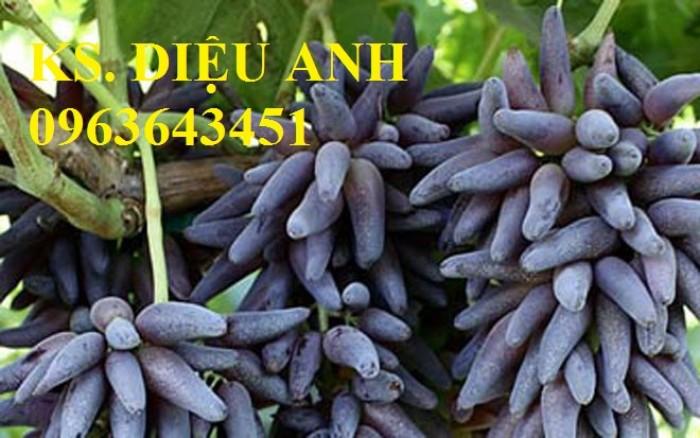 Chuyên cây giống nho nhập khẩu: nho ngón tay, nho móng tay, nho phù thủy, nho Pháp, nho thân gỗ.4