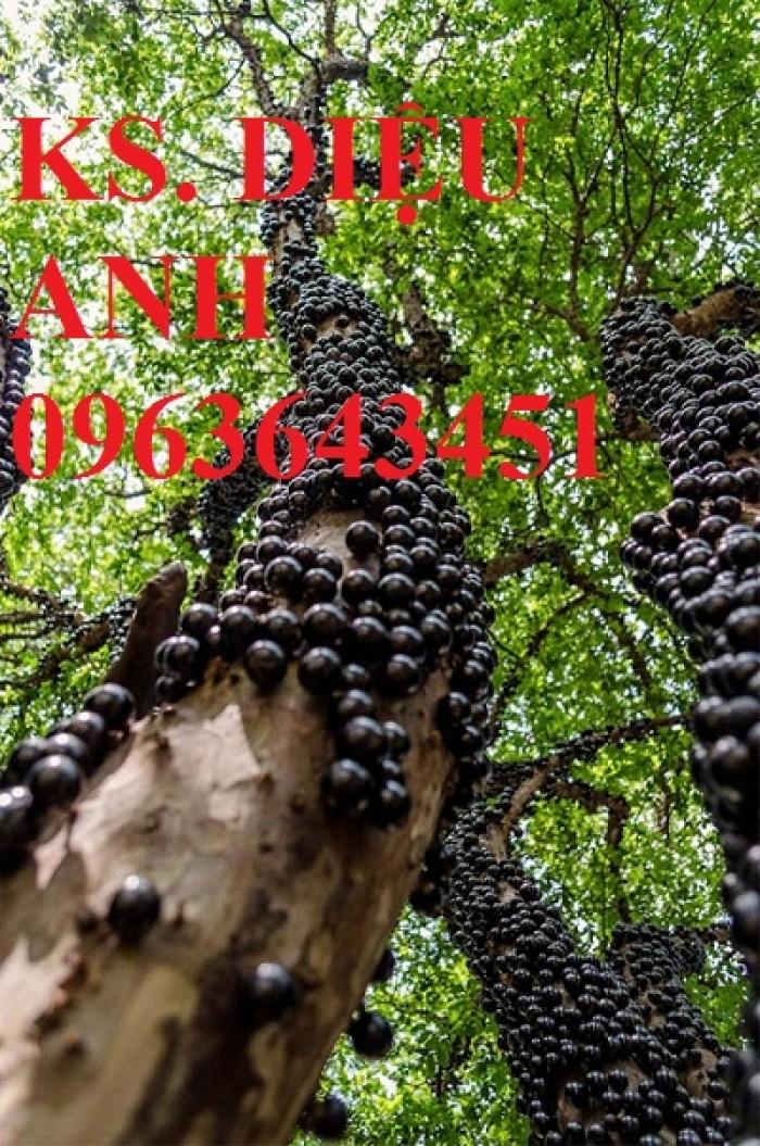 Chuyên cây giống nho nhập khẩu: nho ngón tay, nho móng tay, nho phù thủy, nho Pháp, nho thân gỗ.9