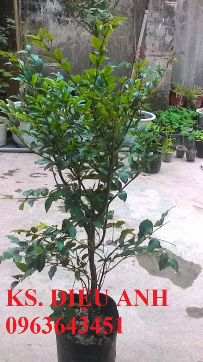 Chuyên cây giống nho nhập khẩu: nho ngón tay, nho móng tay, nho phù thủy, nho Pháp, nho thân gỗ.10