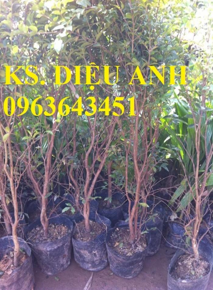 Chuyên cây giống nho nhập khẩu: nho ngón tay, nho móng tay, nho phù thủy, nho Pháp, nho thân gỗ.12