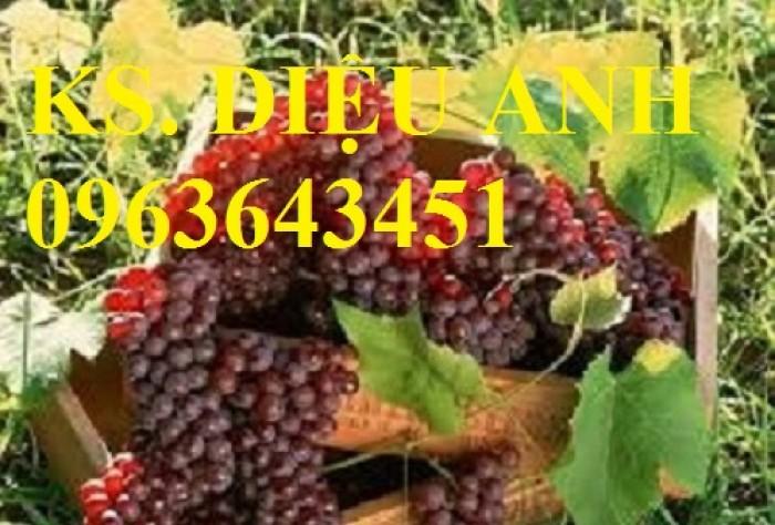 Chuyên cây giống nho nhập khẩu: nho ngón tay, nho móng tay, nho phù thủy, nho Pháp, nho thân gỗ.14