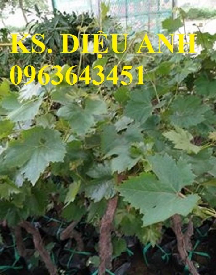 Chuyên cây giống nho nhập khẩu: nho ngón tay, nho móng tay, nho phù thủy, nho Pháp, nho thân gỗ.18