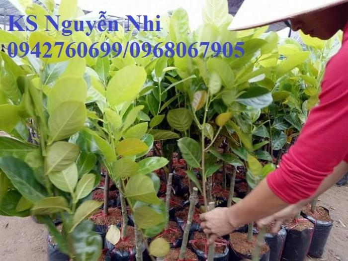 Kỹ thuật trồng và chăm sóc Mít Thái ra trái quanh năm26