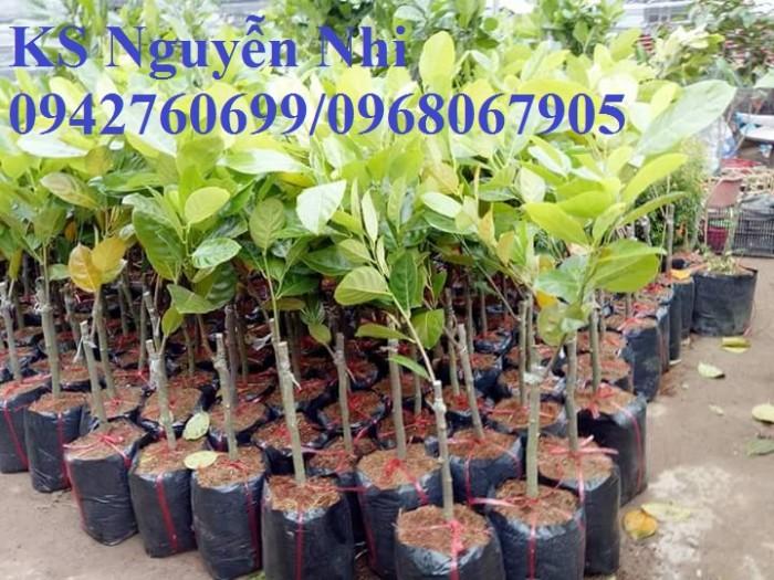Kỹ thuật trồng và chăm sóc Mít Thái ra trái quanh năm24