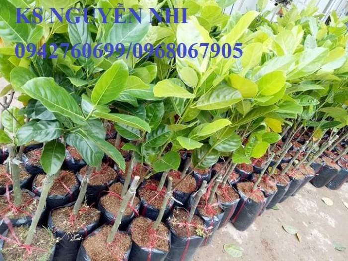 Kỹ thuật trồng và chăm sóc Mít Thái ra trái quanh năm23