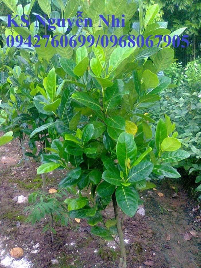 Kỹ thuật trồng và chăm sóc Mít Thái ra trái quanh năm1