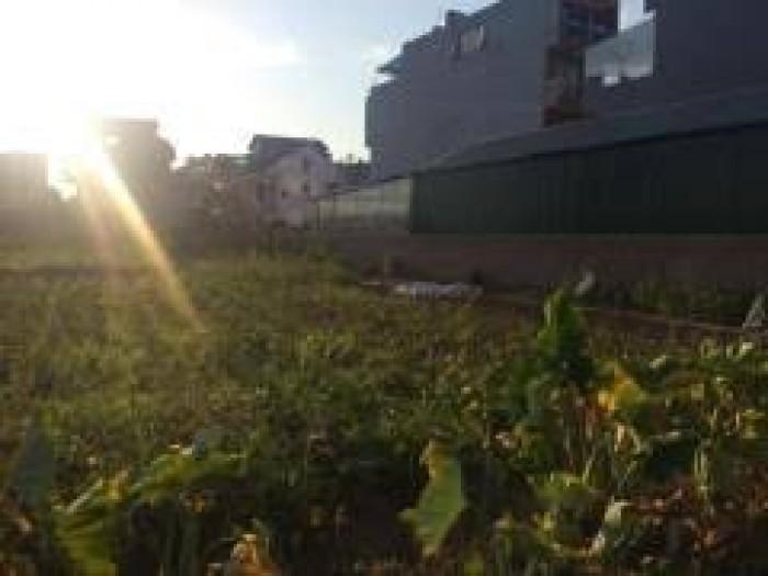 Bán đất 31 ha – Trâu Quỳ, diện tích 123.5 m2