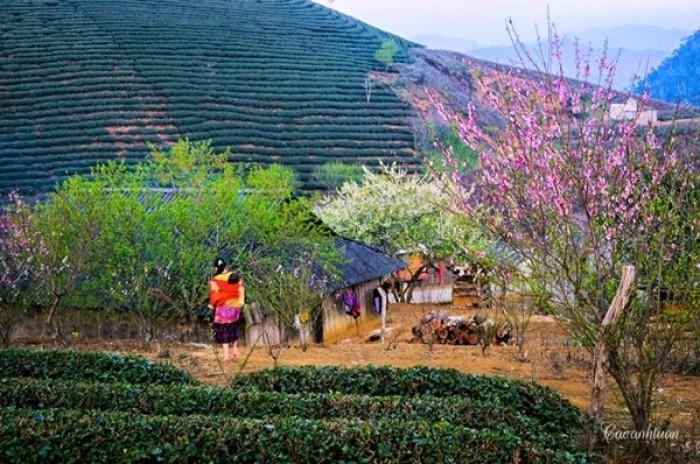 Tour Tây Bắc: Mộc Châu-Sơn La -Điện Biên - Sapa -Fansipan 5N4Đ