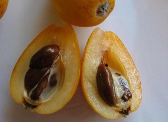 Cung cấp cây biwa, giống cây biwa, cây biwa giống, cây biwa nhập khẩu