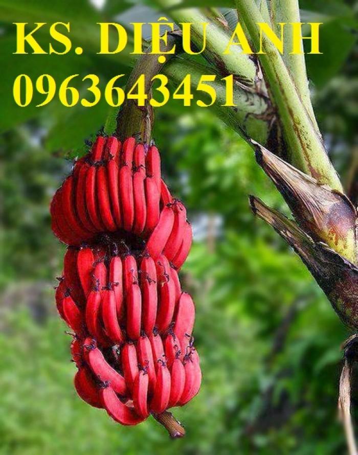 Chuyên cây mới lạ: chanh ngón tay, chuối đỏ Đăcca, chuối tiêu đỏ, cây xoài tím, xoài Úc2