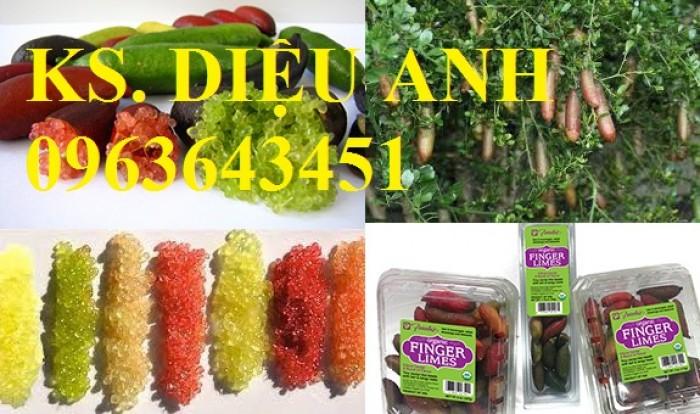 Chuyên cây mới lạ: chanh ngón tay, chuối đỏ Đăcca, chuối tiêu đỏ, cây xoài tím, xoài Úc16