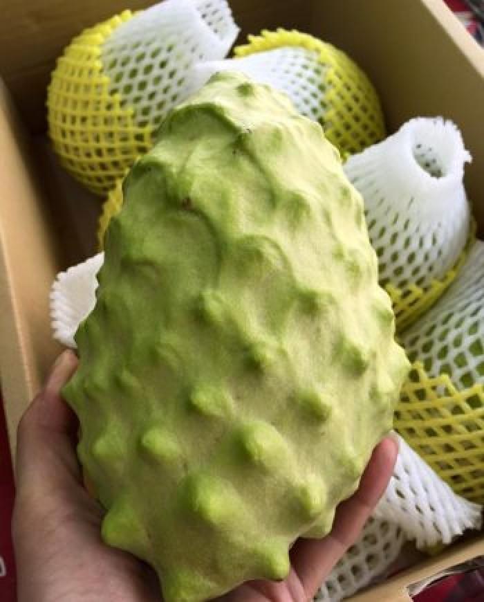 Cây giống na bở Đài Loan, giống cây na bở Đài Loan, cây na bở, na Đài Loan7