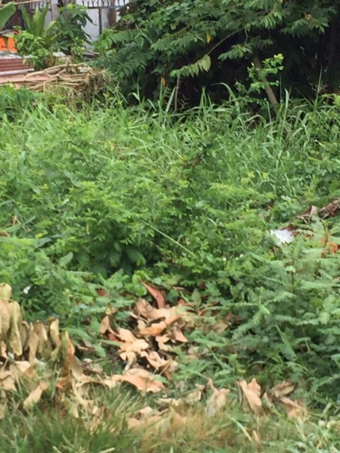 Cần bán nhanh lô đất thổ cư, Huỳnh Tấn Phát, Quận 7, DT 8x8,2m