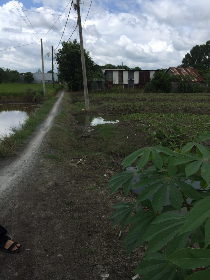 Cần sang lại 1200 m2 đất thổ vườn xã Qui Đức, Bình Chánh.
