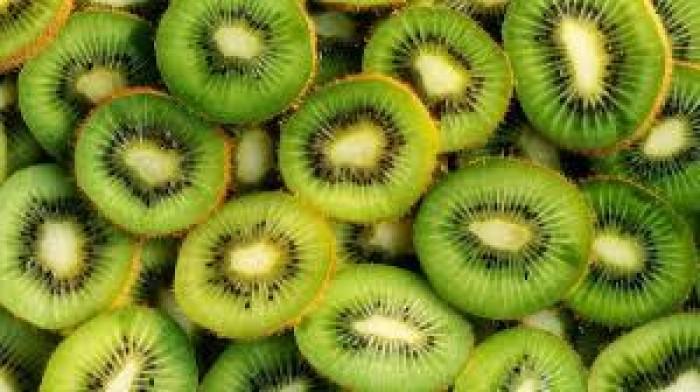 Cây giống kiwi, giống cây kiwi, cây kiwi nhập khẩu, chuẩn giống, số lượng lớn.6