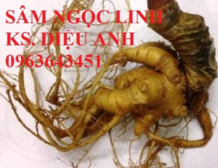 Chuyên cây giống, hạt giống: sâm ngọc linh, sa nhân tím, xạ đen, số lượng lớn, hỗ trợ bao tiêu đầu13