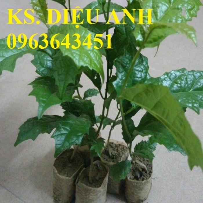 Chuyên cây giống, hạt giống: sâm ngọc linh, sa nhân tím, xạ đen, số lượng lớn, hỗ trợ bao tiêu đầu24