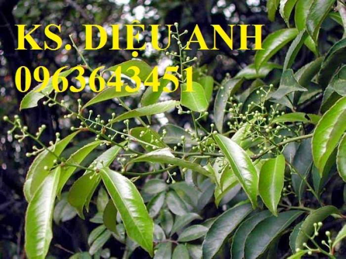 Chuyên cây giống, hạt giống: sâm ngọc linh, sa nhân tím, xạ đen, số lượng lớn, hỗ trợ bao tiêu đầu23