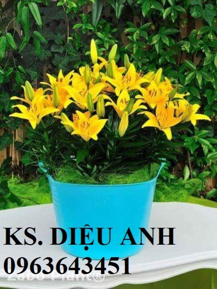 Chuyên sỉ, lẻ củ giống hoa ly tết, củ hoa ly đủ màu, số lượng lớn, chất lượng cao, giao toàn quốc6