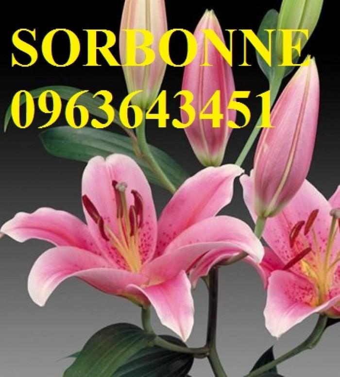 Chuyên sỉ, lẻ củ giống hoa ly tết, củ hoa ly đủ màu, số lượng lớn, chất lượng cao, giao toàn quốc11