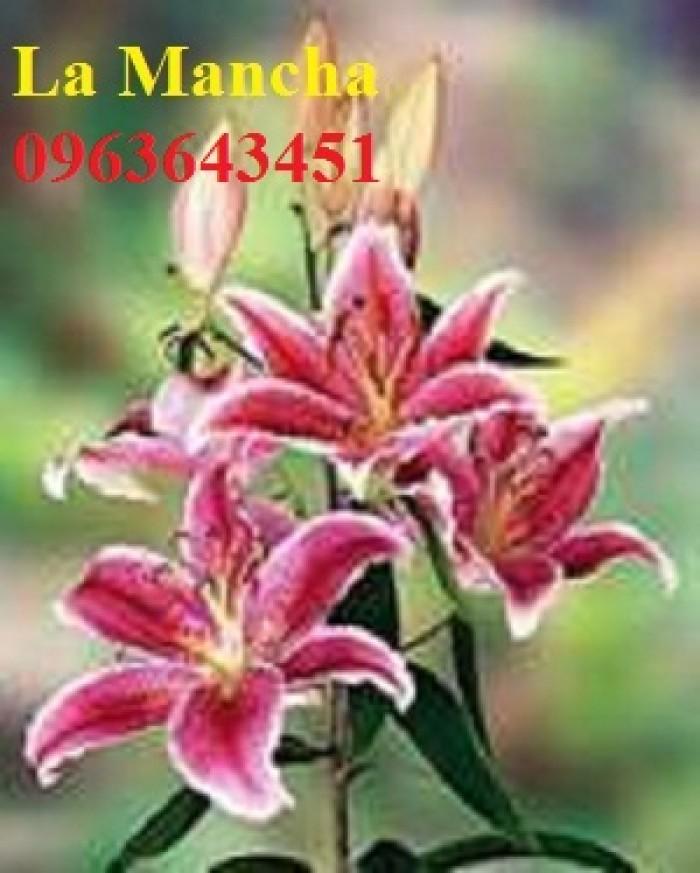 Chuyên sỉ, lẻ củ giống hoa ly tết, củ hoa ly đủ màu, số lượng lớn, chất lượng cao, giao toàn quốc17