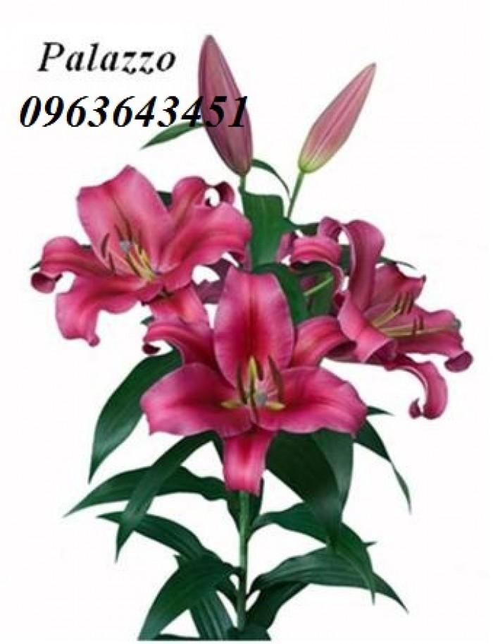 Chuyên sỉ, lẻ củ giống hoa ly tết, củ hoa ly đủ màu, số lượng lớn, chất lượng cao, giao toàn quốc20