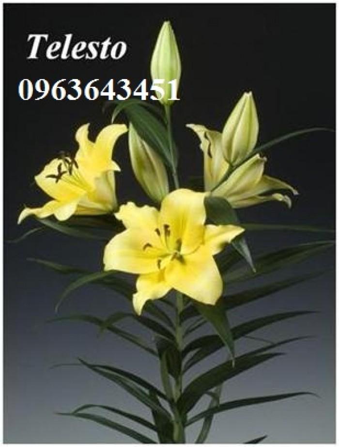 Chuyên sỉ, lẻ củ giống hoa ly tết, củ hoa ly đủ màu, số lượng lớn, chất lượng cao, giao toàn quốc29