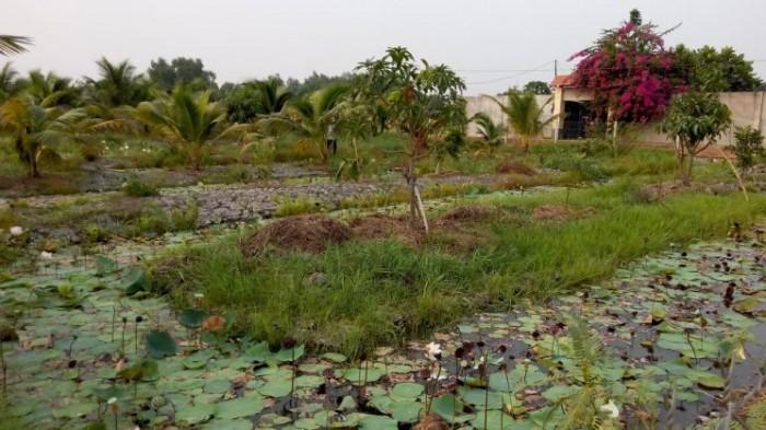Bán đất vườn giá rẻ ở X.Tân Thạnh Đông, H.Củ Chi-DT:3900m2