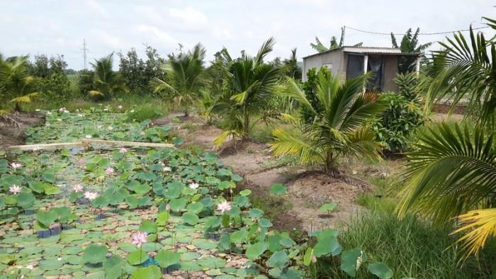 Bán đất vườn giá rẻ ở X.Tân Thạnh Đông, H.Củ Chi